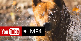 YouTube till MP4 Converter