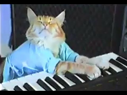 Charlie Schmidts Keyboard Cat